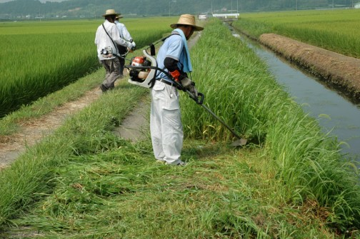 水路脇法面、農道の除草7月29日