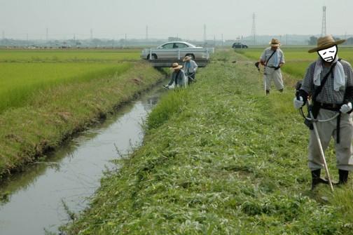 暑かろうが寒かろうが雑草は伸びるのを待ってはくれません。しかしあまりの暑さにこのラインはくじけてしまい、最後まで刈れませんでした。