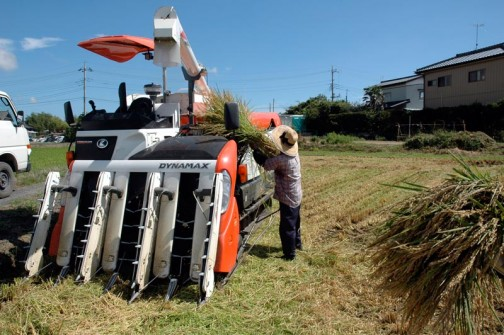 コシヒカリの稲刈り2012