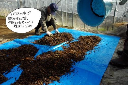 なるべく平らにならして乾燥させます。空気の乾燥した冬ですから結構早く乾くのだそうです。(ここの所なぜか雨が多いですけど・・・))
