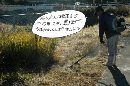 土を蹴飛ばすぐらい綺麗に刈ると見た目はいいのですがすぐに草が伸びてきてしまうのだそうです。見た目はともかくちょっと残して刈るのが草刈の回数を減らすコツなのだそうです。