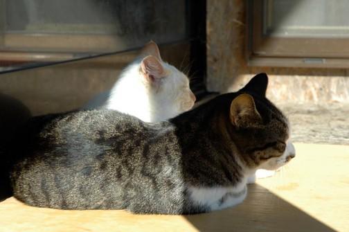 5→1→2・・・3年生存率はいったい?生存率とは言わないか・・・まあ、なぁ〜んにも関係ないよっていう感じのネコたちなのでした。