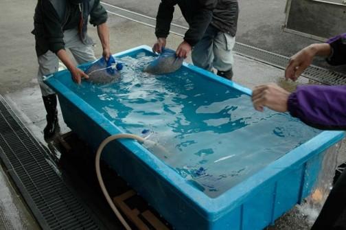 冷たい水で5分以上冷して脱水機で脱水して完了です。