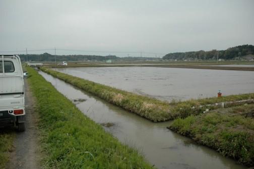 用水路で見慣れない水草発見!