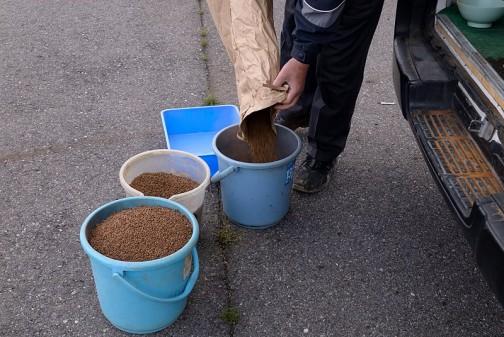 稲の種 色が茶色いのは、種もみに鉄と何かをコーティングしたものだからだそうです。たぶん、プカプカ水に浮かないように重くしてるんでしょうね・・・