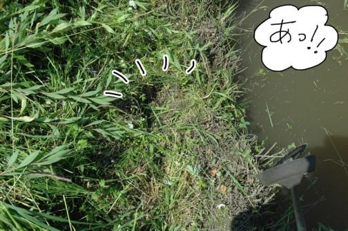 水路の法面を刈っていると・・・あっ!! カモの巣みたいだな