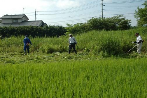 石川川河口の草刈