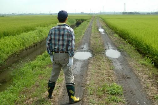 農道の点検 昨日たくさん雨が降ったので水たまりができていますね