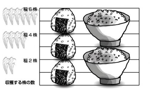 おにぎりとお茶碗の関係・・・おにぎり3個はお茶碗2杯で稲の株にすると6株から取れるお米