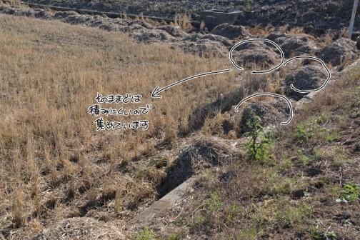こうやって稲藁を山に集めます