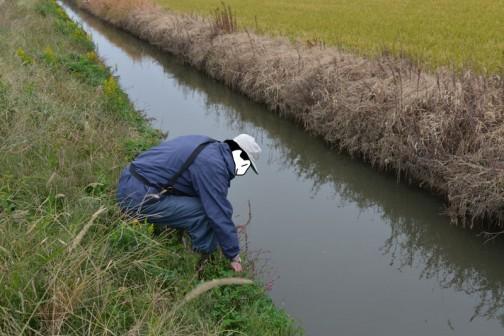 水路の点検 島地区農地・水・環境保全会