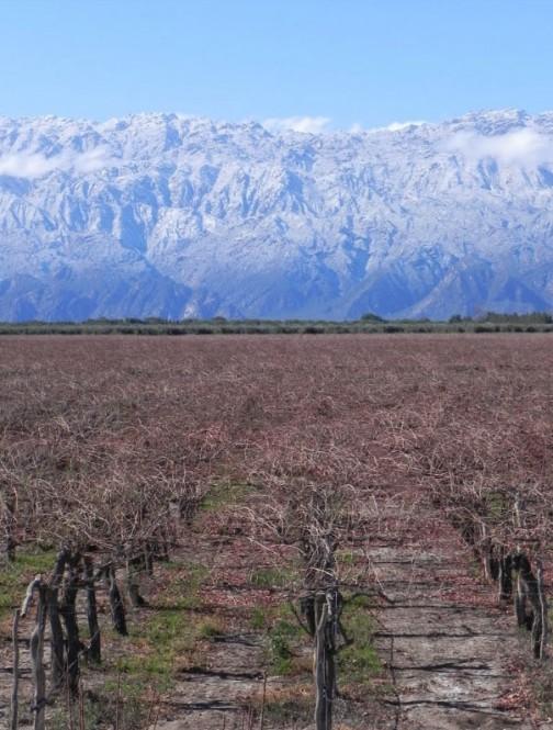 ストリートビューはないけれど、ちょうどその飛行場の脇で撮った写真発見! ブドウです。さすがワインで有名なアルゼンチン。見渡す限りのブドウ畑です。