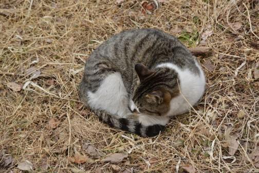 まわりを人が歩いていても、ネコはのんびりと寝ています