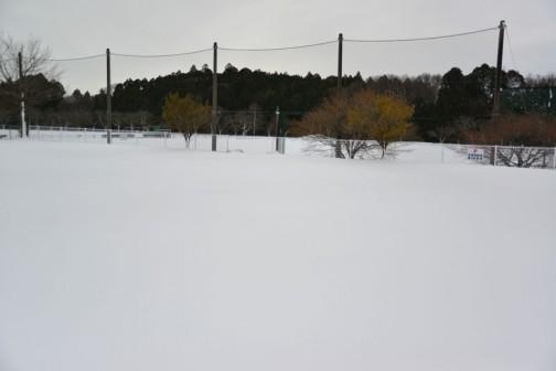 かつて震災瓦礫置場で、お父さんソフトボールの会場もこんなことになってます。雪は15センチ〜20センチくらいですかねえ・・・ 景色が違って見えます。