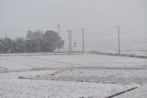 現在水戸市大場町では現在ドカドカ雪が降っています。これでは明日凍って大変ですねえ