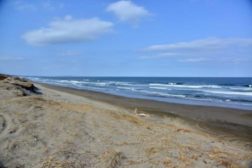 久しぶりに海へ行ってみました。寒くて人が少ない時だけ行っています。画面左の海の上にうっすらと見える陸地が大洗です。海岸線は湾曲しているんですね。春の日差しにだんだん人が出てきた感じです。