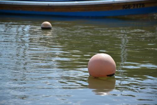 春の日差しがあると川の水もトロトロで暖かそうなお湯に見えます。