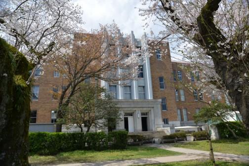 茨城旧県庁舎の桜