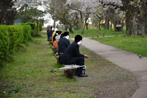 弘道館鹿島神社の桜 ちょうどお昼時。お弁当を広げる前に何となく花見といった感じです。さすがにこの状態でスマホに見入っている人はいません。