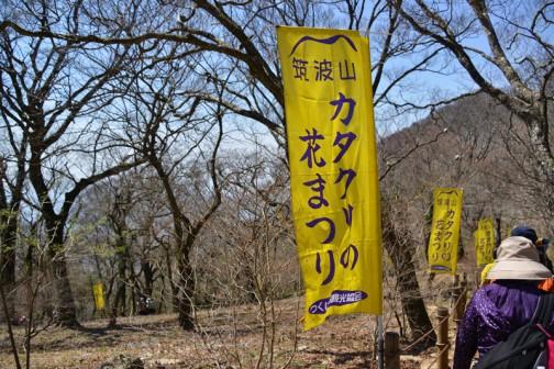 カタクリ(片栗、学名:Erythronium japonicum Decne.)は、ユリ科カタクリ属に属する多年草。古語では「堅香子(かたかご)」と呼ばれていた。