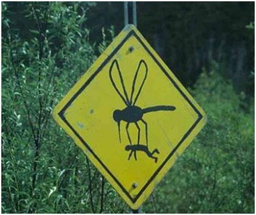 これは・・・実際にこういう事はないでしょうけど、ハチ、少なくとも虫かなんかに注意ってことなんでしょう。