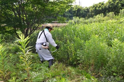 まさに侵入するという感じ・・・自分の背よりはるかに高い葦の中へ突入です。