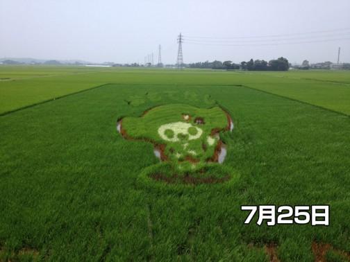 水戸市川又田んぼアート協議会の「田んぼアート」