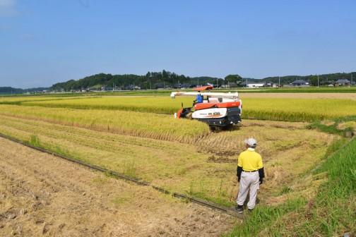 クボタコンバインER108での稲刈りです。人員はオペレーターと玄米を乾燥機へ運ぶ人、それから細かいことをするアシスタントの3人です。