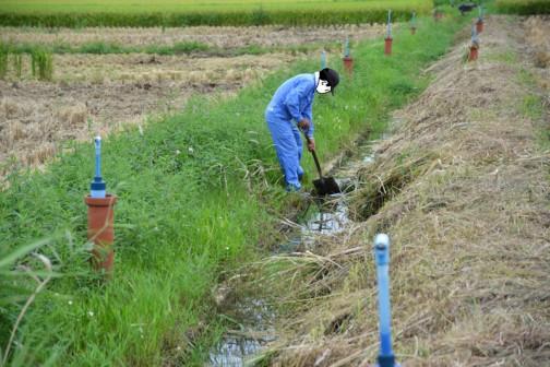 排水路の柵渠を調べています。
