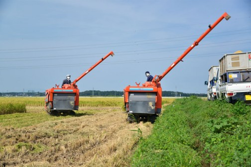 稲刈り2014、1枚の田んぼに2台のコンバイン!