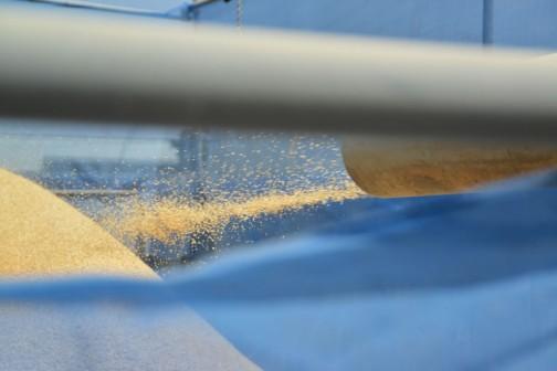 Sさんのところでは、午前中二台の乾燥機の中身のもみすりをして、午後から稲刈りに出かけてまた二台の乾燥機を一杯にする・・・というローテーションを稲刈りシーズンは続けるのだそうです。