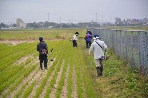 11月の島地区農地水環境保全会の活動