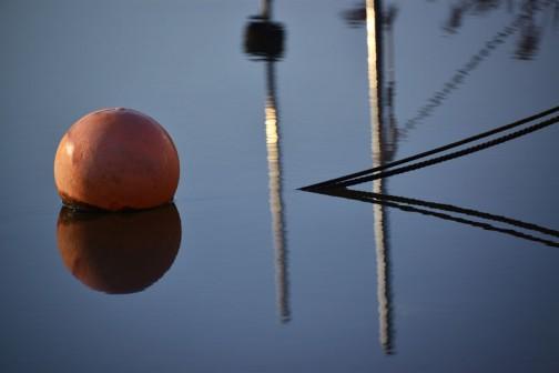 風もなく、波も立っていず、石川川の水面が鏡のようです。