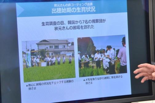 出穂始期の生育状況 生育調査の日、韓国から7名の視察団がほ場を訪れた
