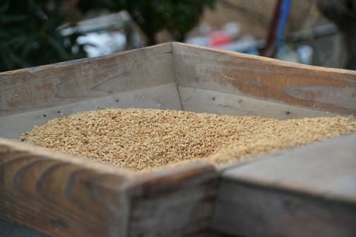 それを唐箕に投入して悪い籾を取り除きます。