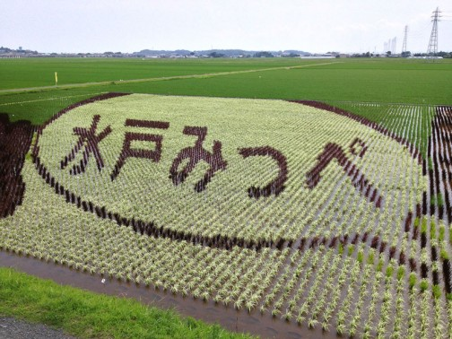 水戸市川又町の田んぼアート