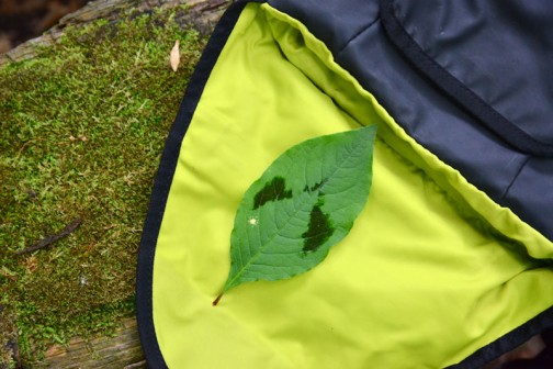 ミズヒキの葉
