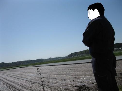 鉄コーティング、稲の直播き