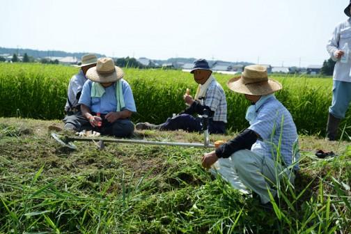 水戸市大場町島地区農地水環境保全会の草刈り。8月9日の活動の様子。