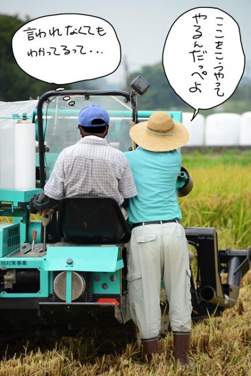 飼料稲の収穫2015