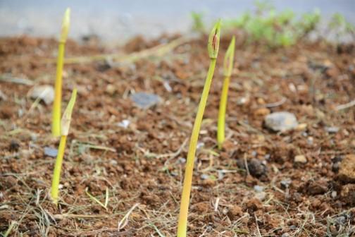 水戸市大場町島地区、環境保全会7月の活動。景観形成のための施設への植栽等。