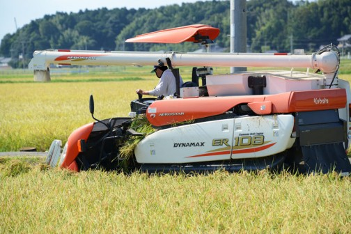 茨城県水戸市大場町島地区のコシヒカリの稲刈り2015