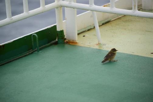 そんな海の上にスズメ大の鳥が飛んできました。何という鳥だろう・・・