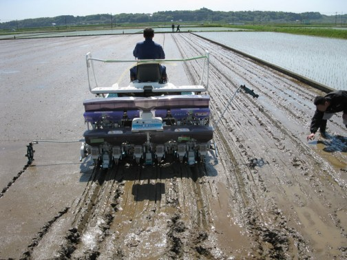 飼料稲の直播の様子
