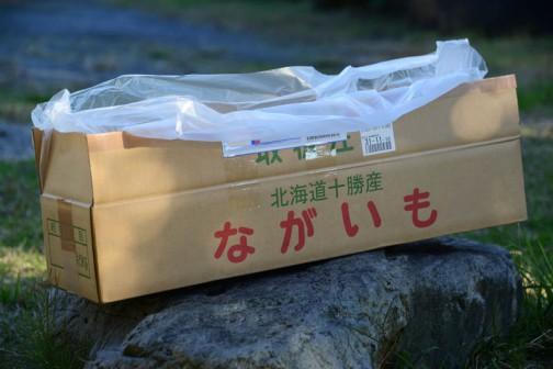 北海道から長芋を送っていただきました。