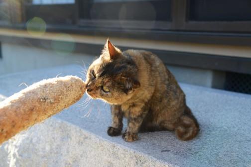 長芋に興味があるようです。
