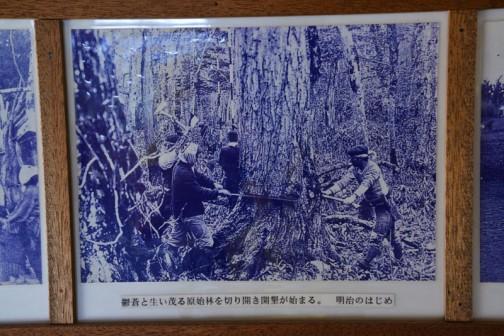 鬱蒼と生い茂る原始林を切り開き開墾が始まる。明治のはじめ
