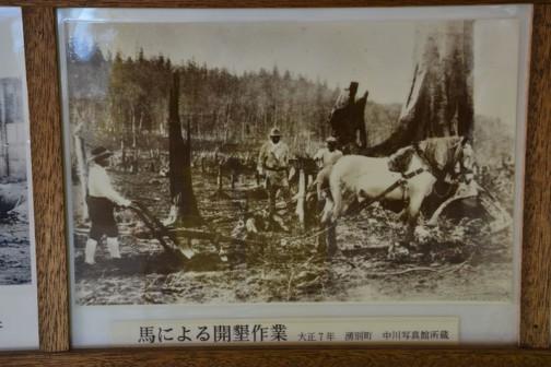 馬による開墾作業 大正7年 湧別町 中川写真館所蔵