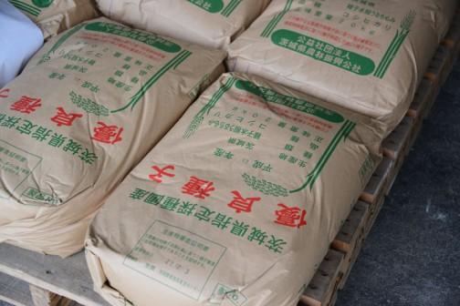 こちらはこれから消毒する食用の種籾。コシヒカリです。