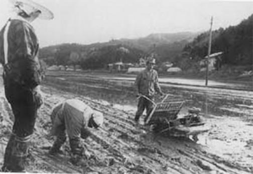 秋田県のサイトの昔の田植え風景の写真を見つけました。昭和42年(1967年)の写真だそうです。苗スライダーの形状とエンジンの位置からクボタの「春風」さんと思われます。